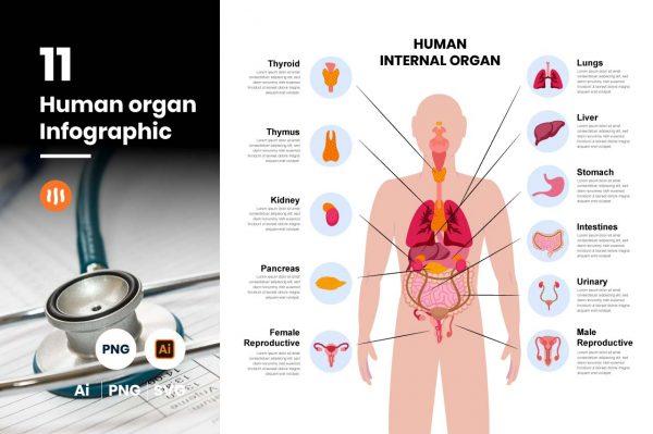 gitaset_11-human-organic-infographic